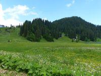 RCZentralschweiz-Events-Ziesel-Sommer-2018-03